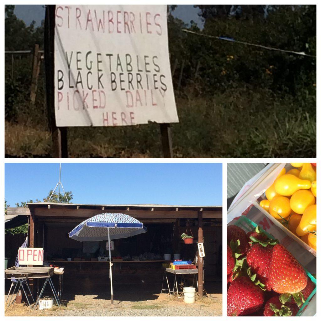 chico roadside farmstand
