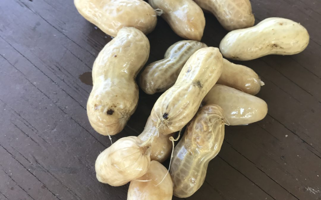 Boiled Peanuts from North Carolina