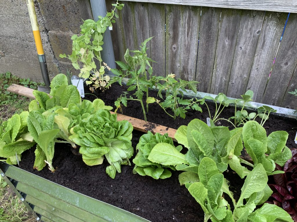 Square Foot Gardening Bed